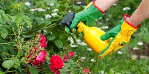 pesticida-e1424123707453