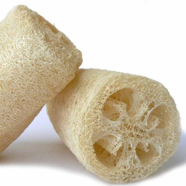 luffa- esponja vegetal
