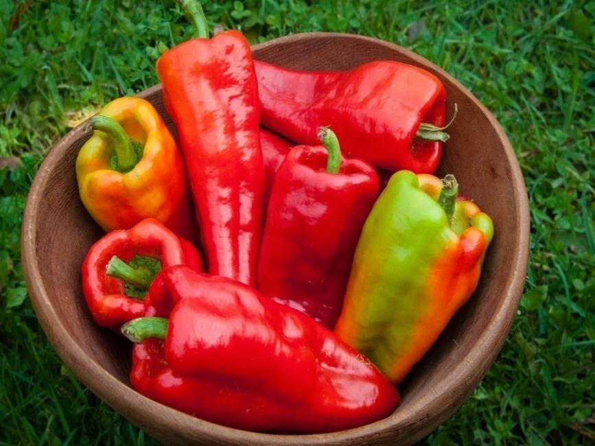 cultivar pimiento morrón en tu casa- preparaciones y recetas