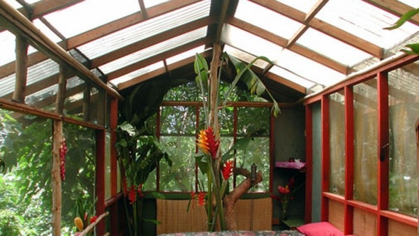 Interior-arbol-Hawai-magnificas-vistas_TINIMA20121116_0351_3