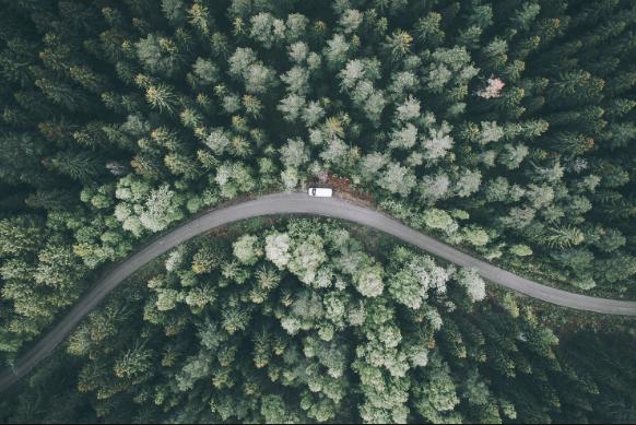 dron bosque