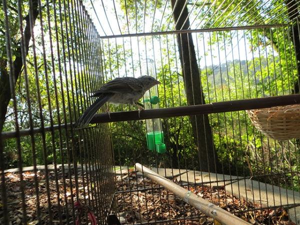 bird-day33-release-day