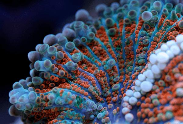 Macro-Shots-of-Underwater-Corals-4-600x407