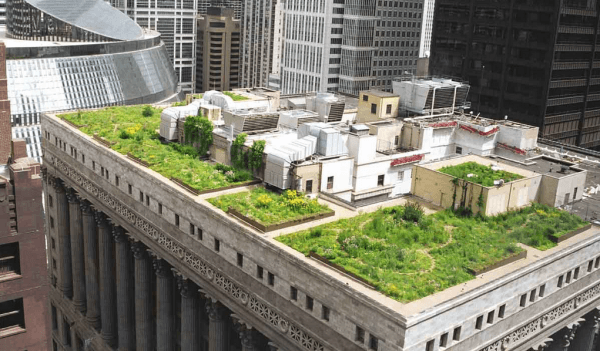 green-roofs (1)