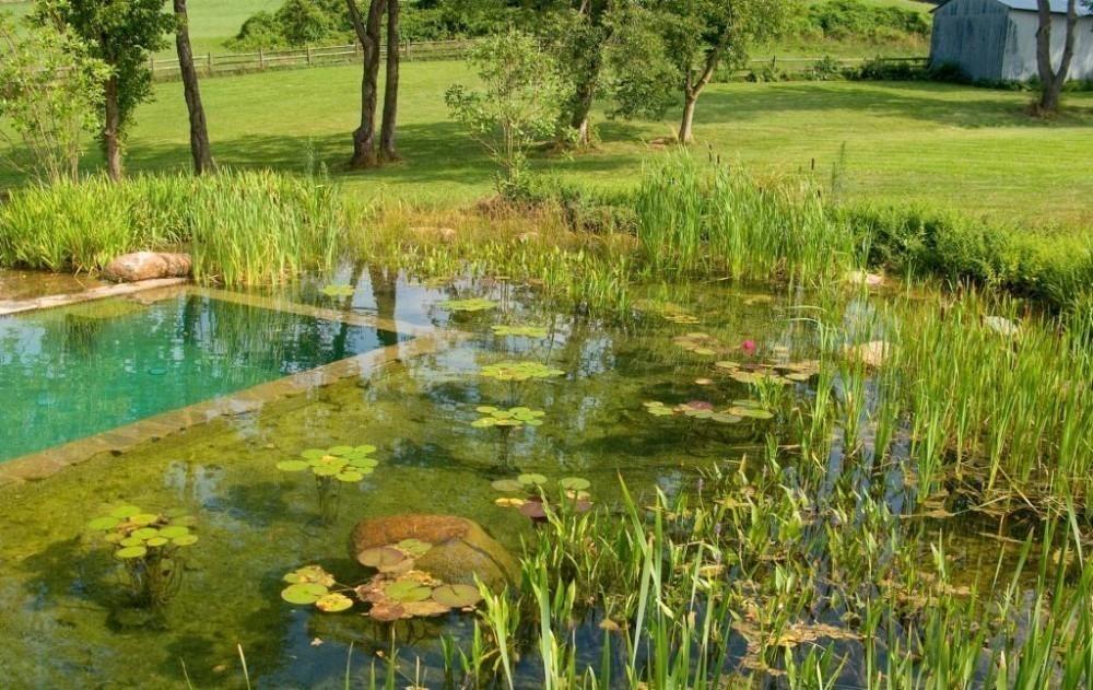 Piscinas ecol gicas para preservar el medio ambiente - Coste mantenimiento piscina ...