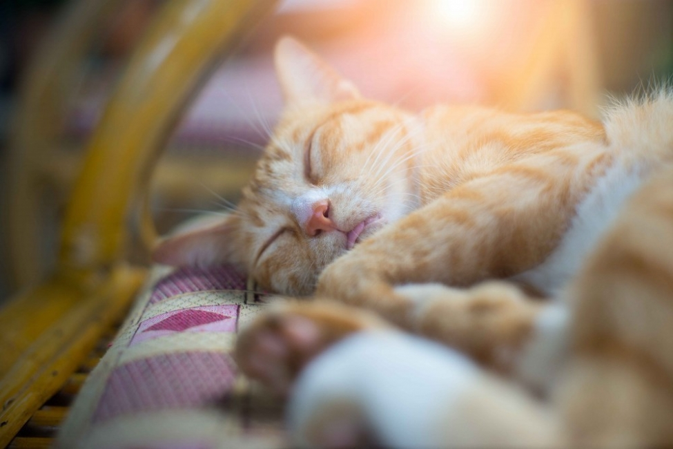 Gatito durmiendo