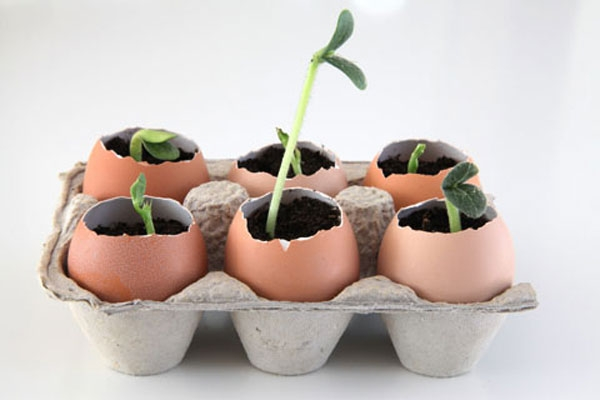 Seedlings-in-Eggshells