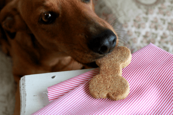 Violeta comiendo sus galletas