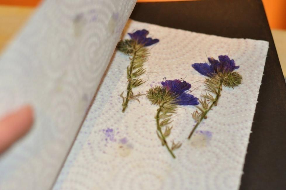 flores secas planchadas