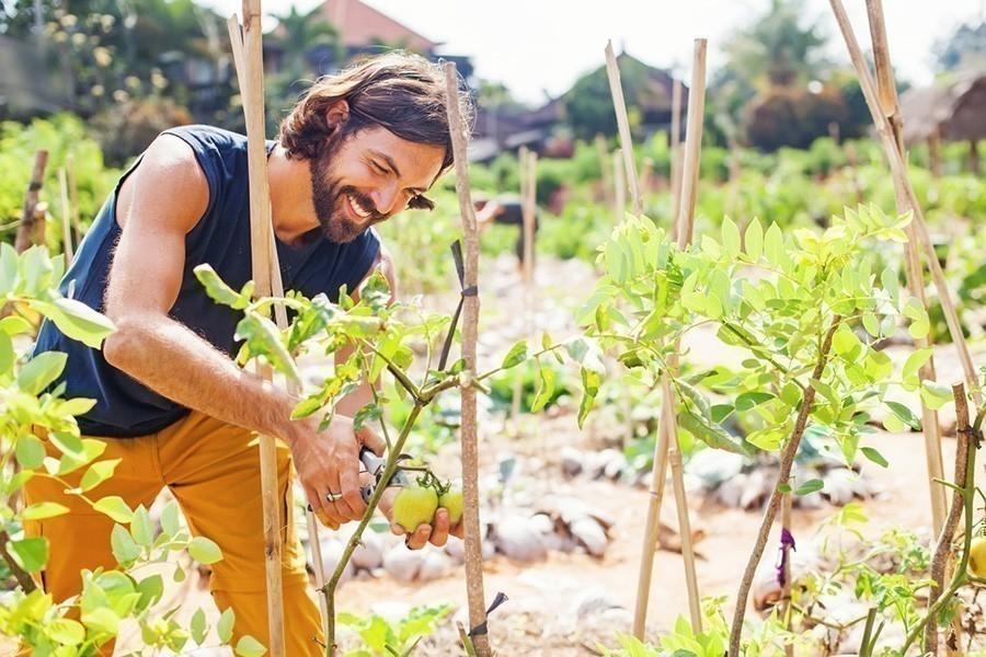 ONU - cosechas ecológicas son la mejor forma de alimentar al mundo