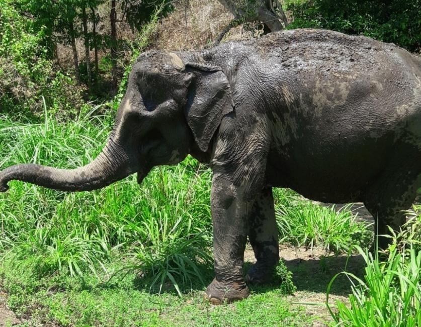Elefanta Mae