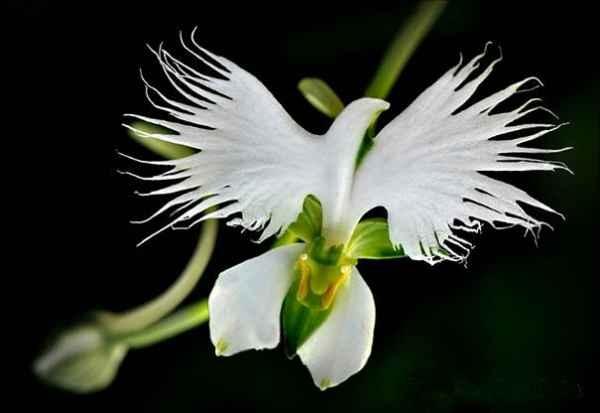 flores-que-parecen-animales-orquideas-30