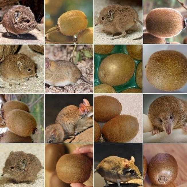 animales que parecen objetos por Karen Zack- kiwi
