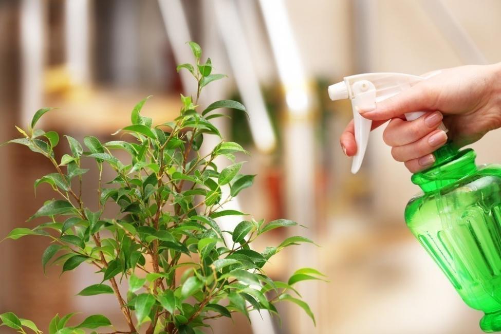 agua oxigenada- pesticida