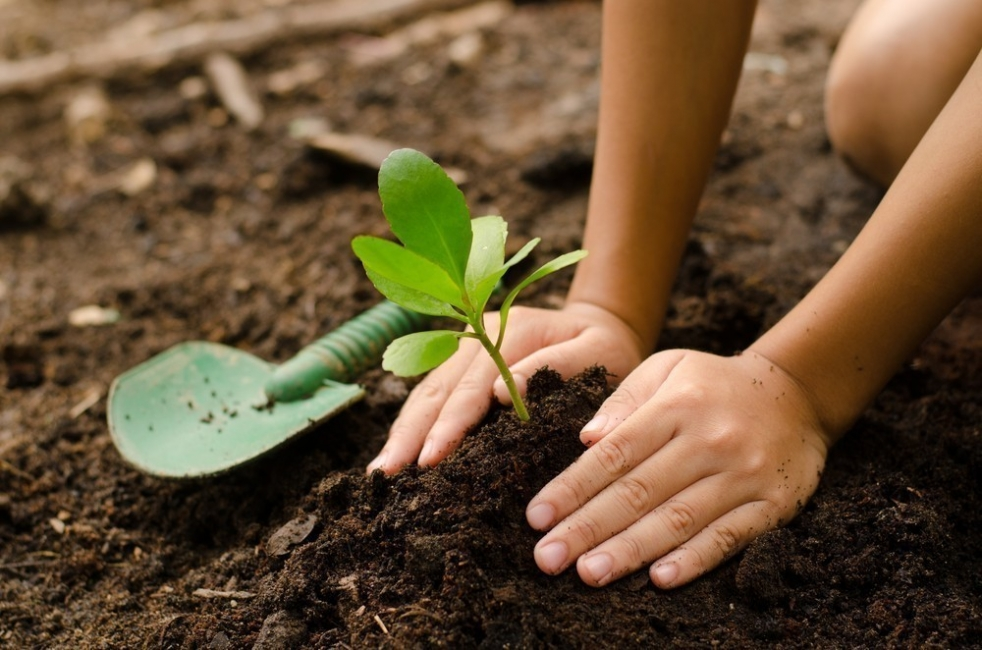 madre e hija regalan plantas- historia- permacultura