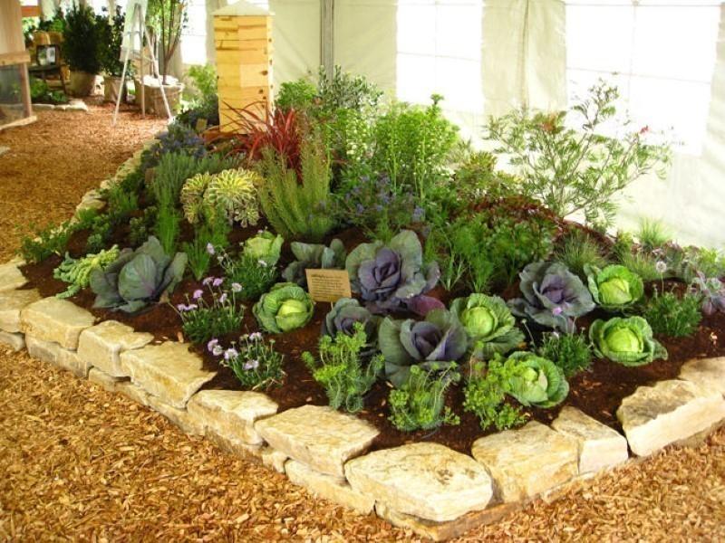 Jardín comestible con lechugas moradas y verdes