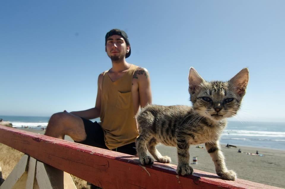 gato surfer