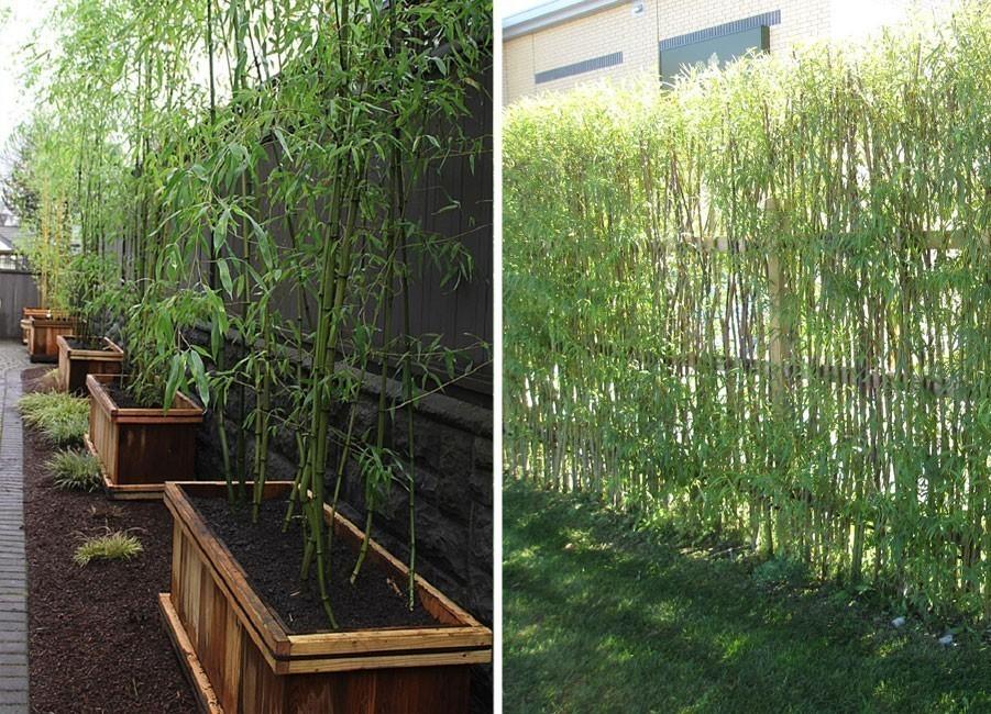 Ideas para crear divisiones verdes en tu jard n for Bioguia jardines