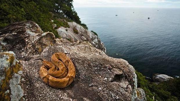 serpiente en la isla