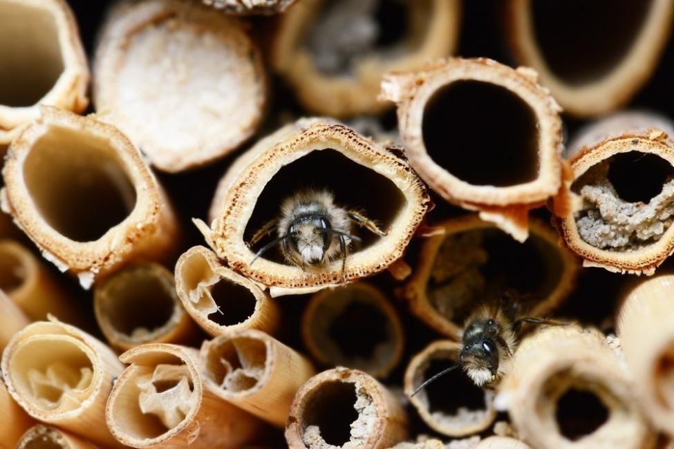 hotel para abejas- cañas