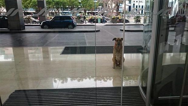 Este perro esperó en un hotel seis meses hasta conseguir que su elegida lo adoptase