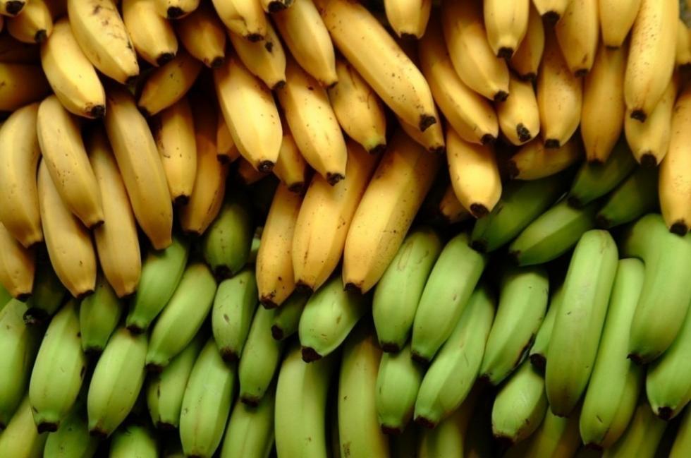 cultivar bananas en tu hogar- bananas