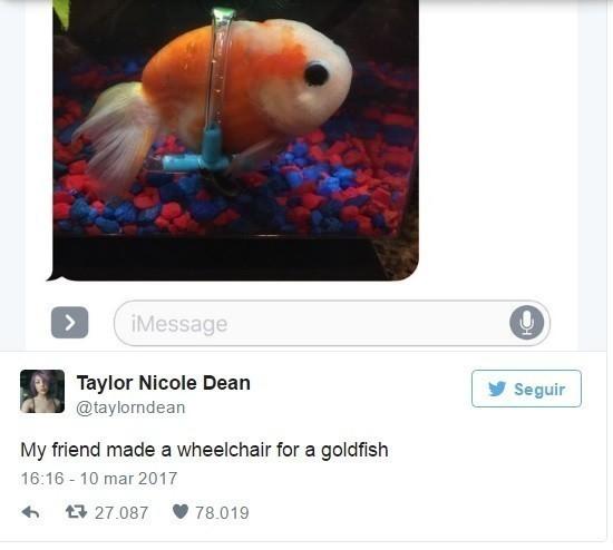 pez en silla de ruedas