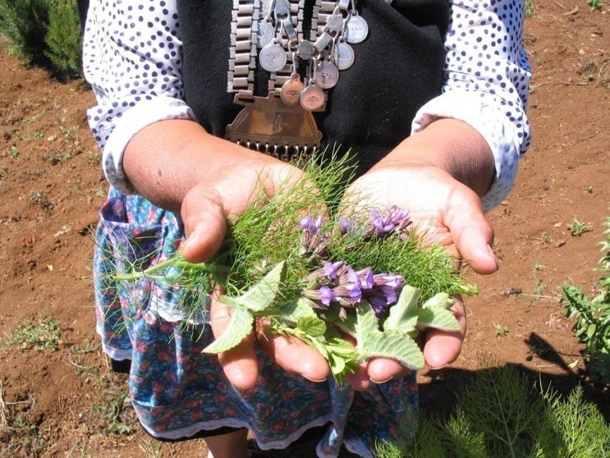 5 plantas shamánicas que sanan tu cuerpo- libro hierbas y plantas curativas
