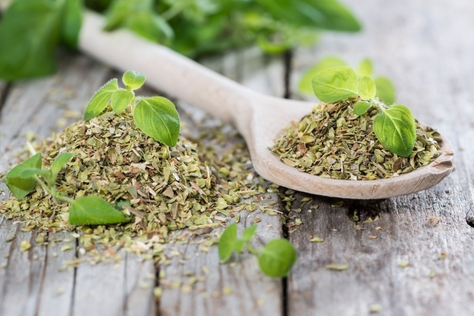 orégano- plantas antibióticas
