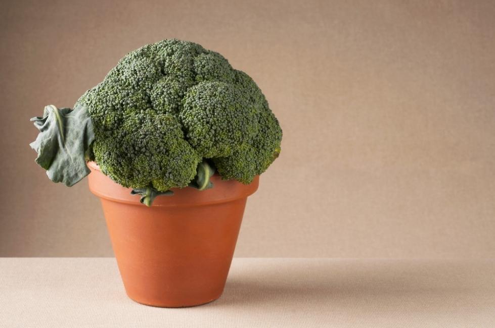 brocoli en maceta