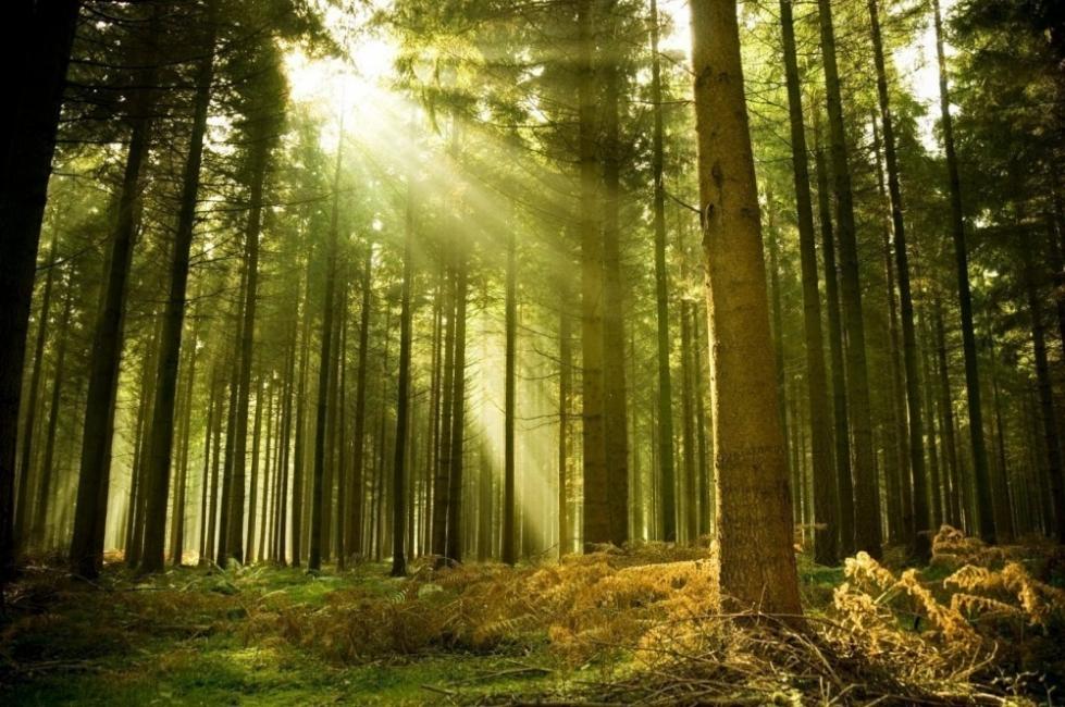 bosques estado actual- día de los bosques