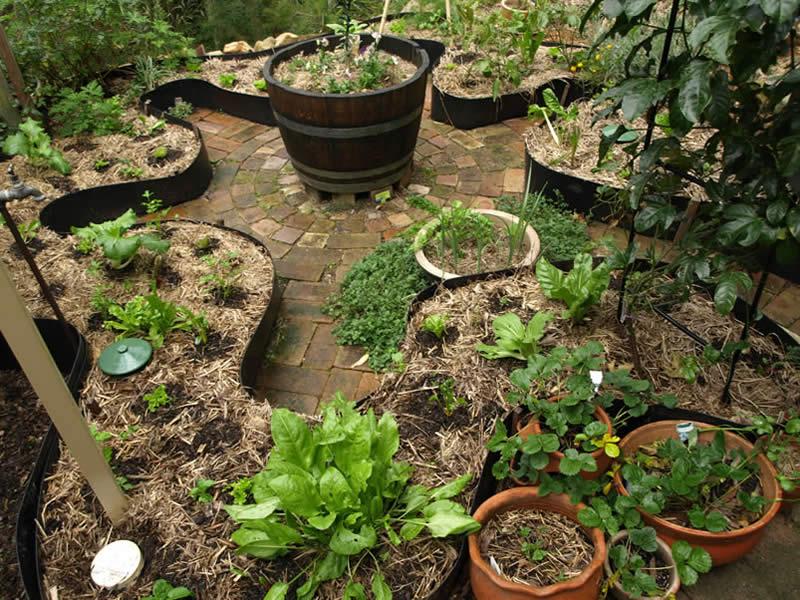 jardín comestible en patio- qué plantar