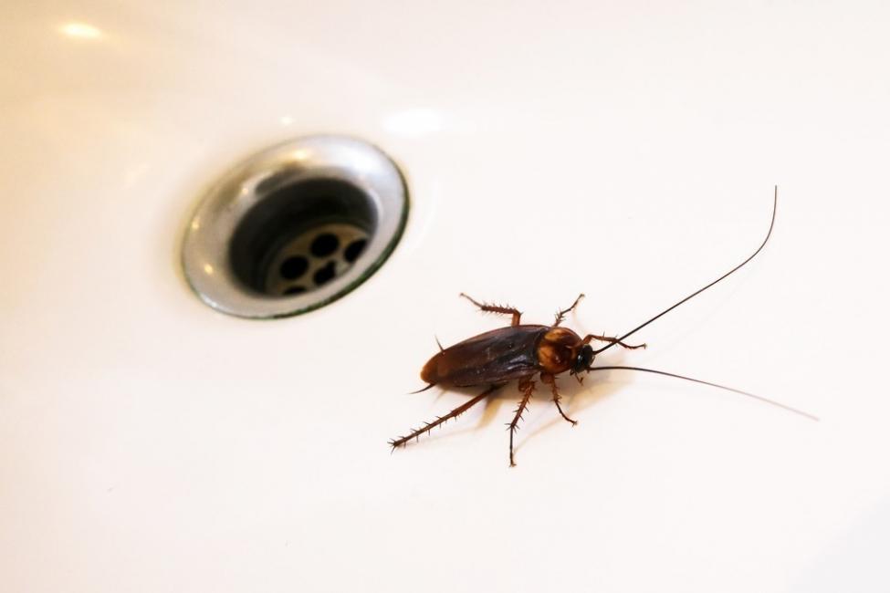 Cómo eliminar cucarachas de manera natural  y sin hacerles daño