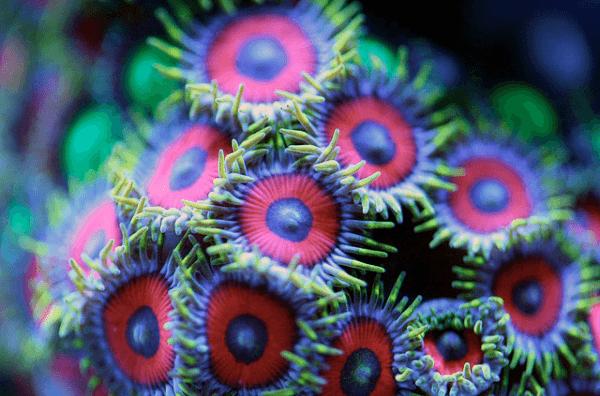 Macro-Shots-of-Underwater-Corals-3-600x396