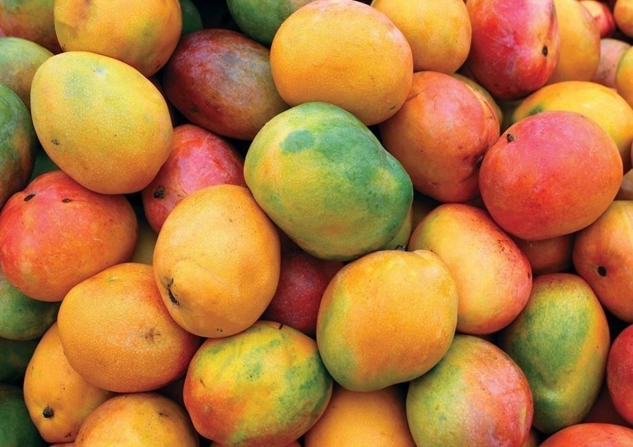 cultivar mango en macetas- frutas