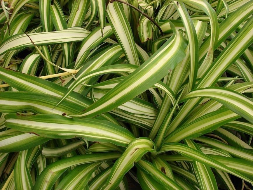 plantas para desintoxicar tu hogar-lazo de amor