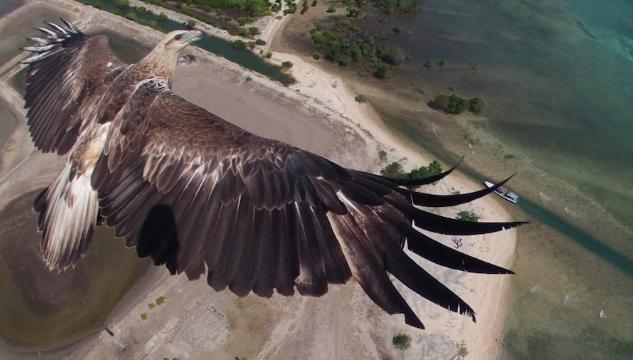 dron águila