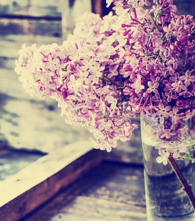 Flores y personalidad- lila