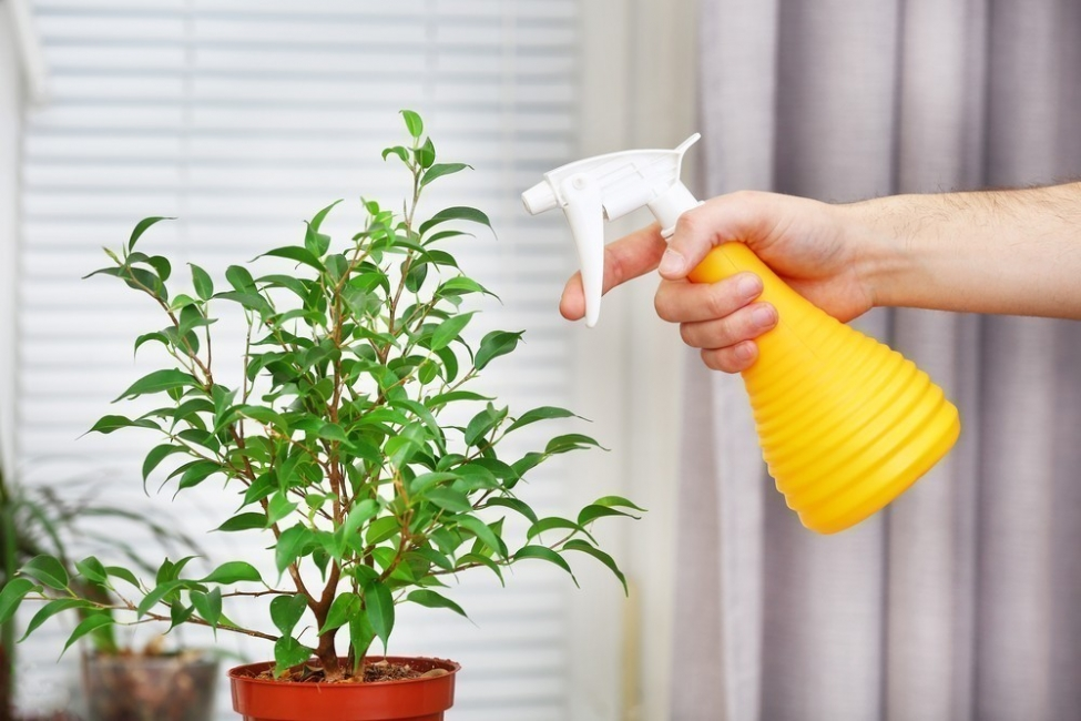 atomizador de jabón para las plantas