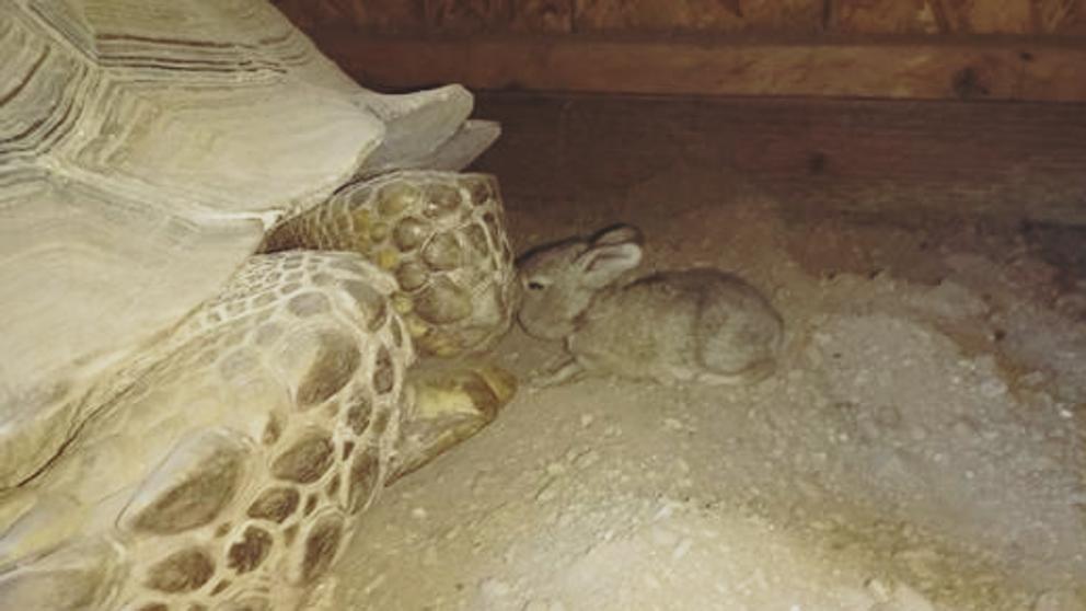 amistad conejo tortuga