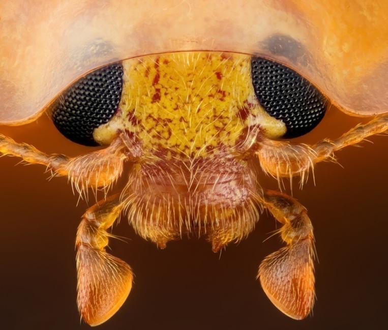 Increíbles fotografías de la realidad microscópica que nos rodea- 3