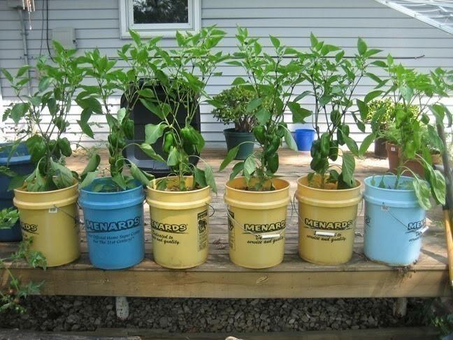 cultivar en botes de pintura-