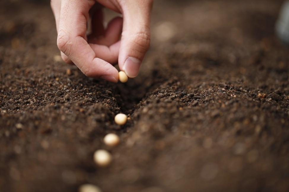 Bariloche- plantar por nacimiento- sembrar