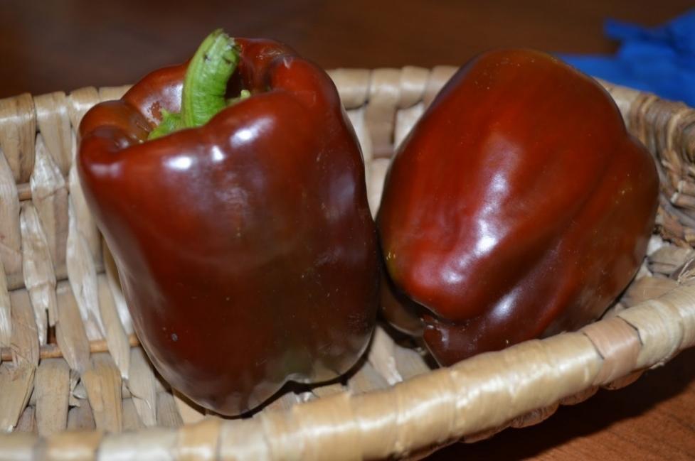 jardín de chocolate  - pimientos color café