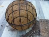 Succulent-sphere4