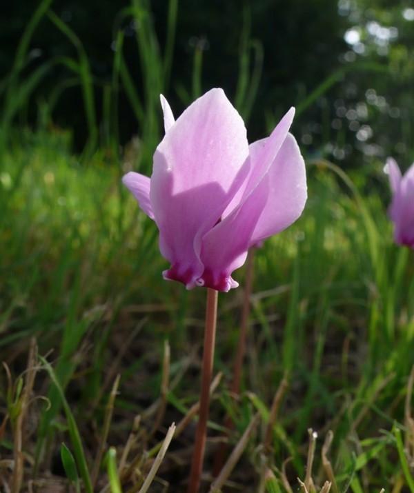 plantas-para-cultivar-bajo-los-arboles-06-e1383415897596