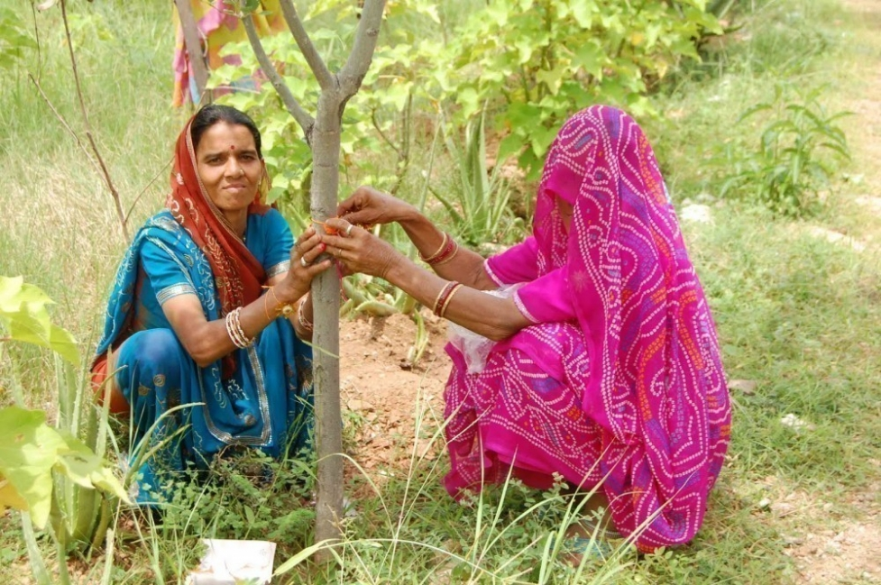 pueblo indio de Piplantri- mujeres y árboles- cintas en los árboles