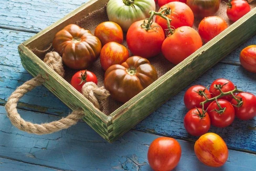 distintos tipos de tomate
