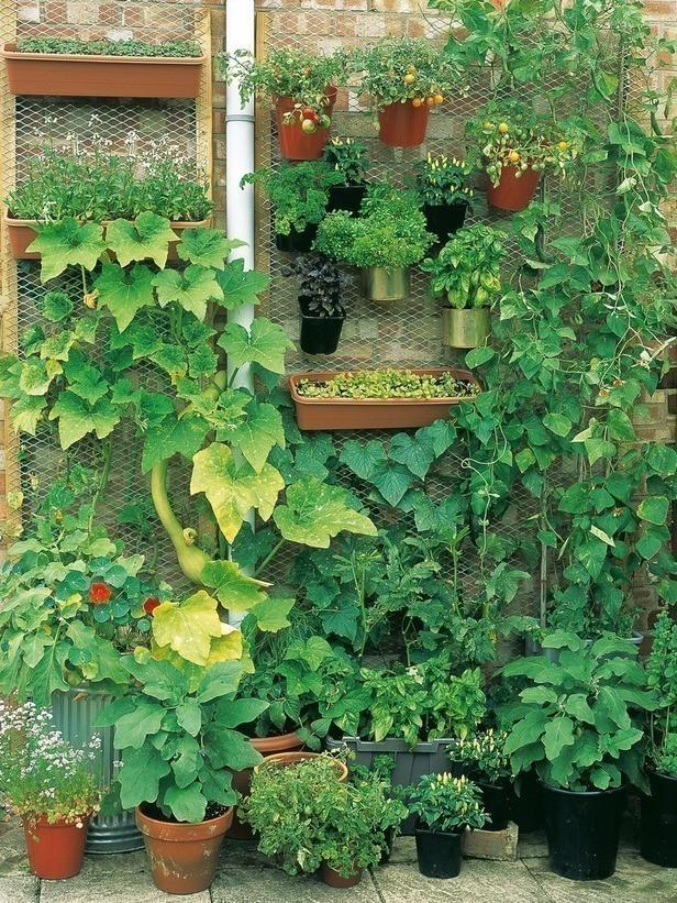 jardín vertical - enrejado