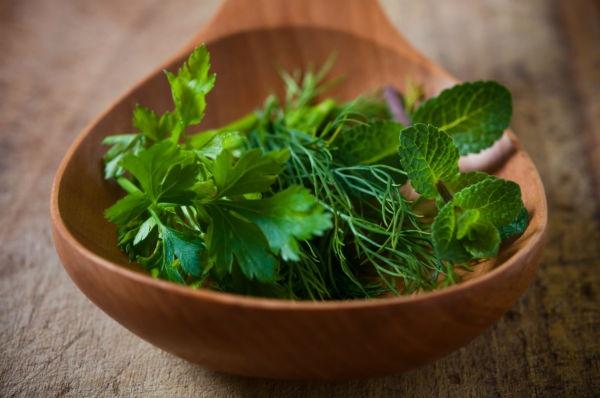 plantasmedicinales4